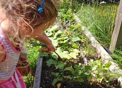 Small Friends on Nantucket garden